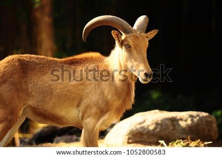 Deer of Indonesia #1052800583