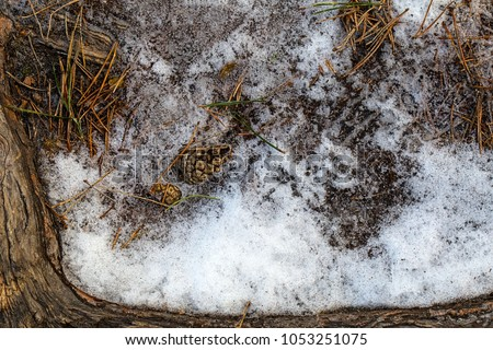pine needles and cones on the snow in a wooden frame #1053251075