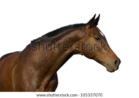 horse's portrait isolated on white background #105337070