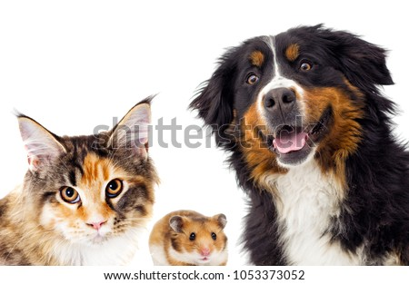 cat and dog and hamster peep out #1053373052
