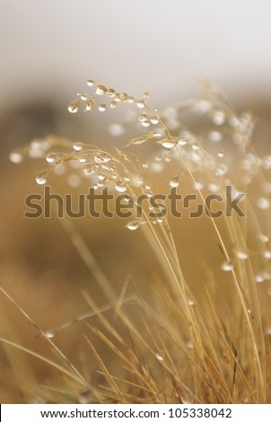 Fresh morning dew on spring grass, natural background - close up #105338042