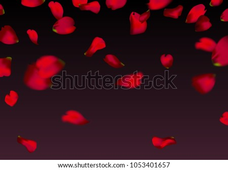 red sakura or rose falling petals #1053401657