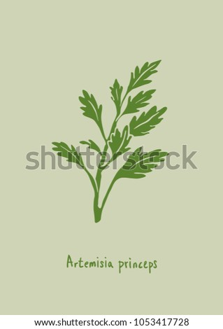 Vector Illustration. Artemisia princeps (mugwort) illustration with color. #1053417728