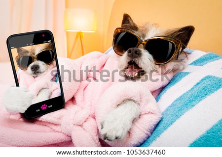cool funny  poodle dog resting and relaxing in   spa wellness salon center ,wearing a  bathrobe and fancy sunglasses, taking a selfie with smartphone or cell phone #1053637460