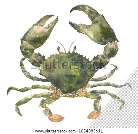 Fresh raw sea crab painted in watercolor style.easy die cut by clipping mask.