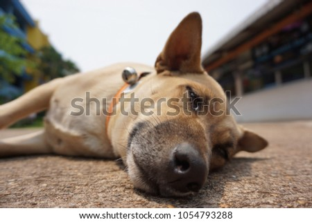 The dog sleeping on road #1054793288