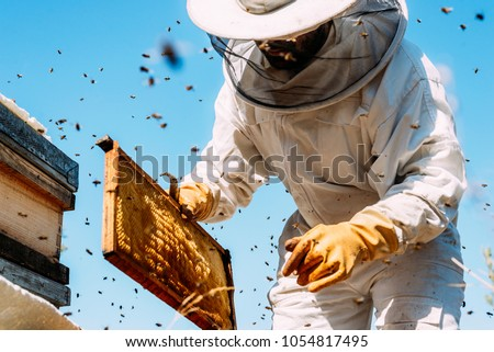 Beekeeper working collect honey. Beekeeping concept. #1054817495