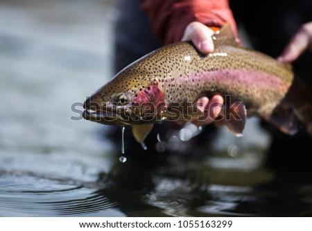 Fishing Rainbow Trout #1055163299