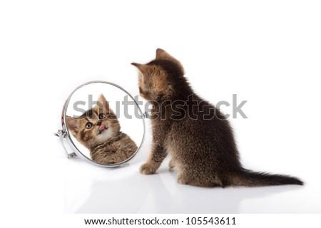 kitten with mirror on white background. kitten looks in a mirror. #105543611