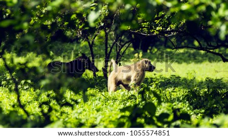 African animal baboon #1055574851