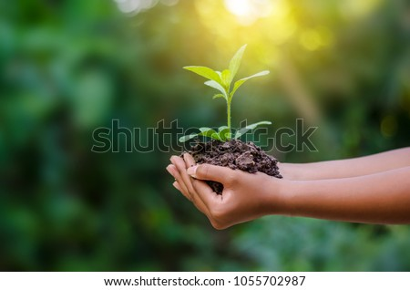 environment Earth Day In the hands of trees growing seedlings. Bokeh green Background Female hand holding tree on nature field grass Forest conservation concept Royalty-Free Stock Photo #1055702987