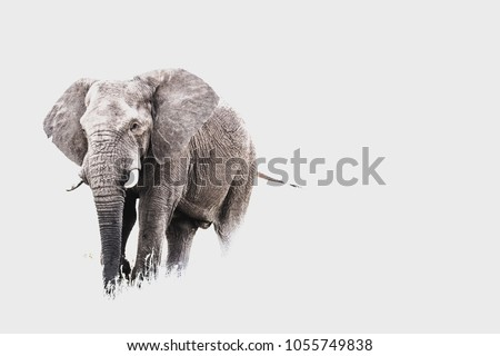 Horizontal photograph of an Elephant bull in Pilanesberg National Park in South Africa. #1055749838