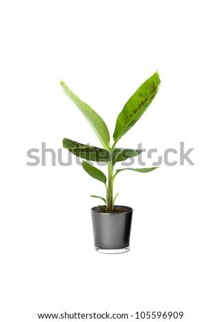 Ornamental Plants over white background #105596909