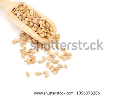 pearls barley grain seed on background #1056073286