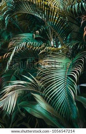 Deep dark green palm leaves pattern. Vertical, creative layout