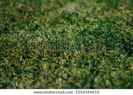 green grass texture, closeup view #1056564653