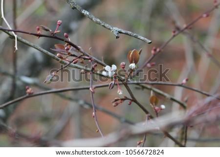 spring flower on a tree branch #1056672824