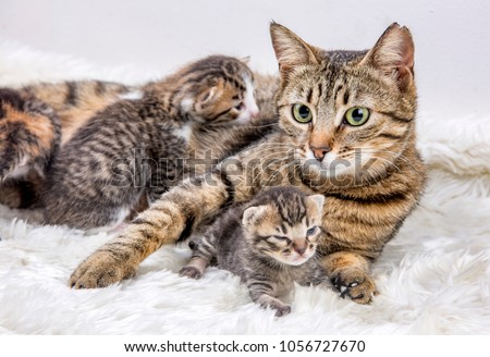 Mom (mother) cat and baby cat (kitten) #1056727670