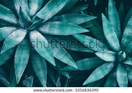 tropical leaves, blue toned #1056836390
