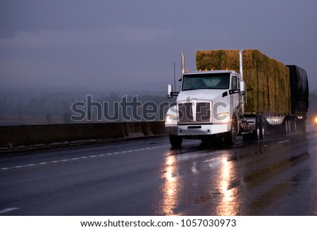 Powerful day cab big rig semi truck transporting pressed hay on two flat bed trailers driving by evening wet road in rainy weather with headlight reflection in twilight #1057030973