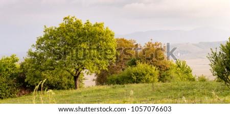 Downy oak on the Sigolsheim mountain, Alsace, France #1057076603