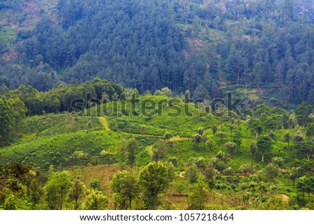 green tea plantations high in the mountains #1057218464