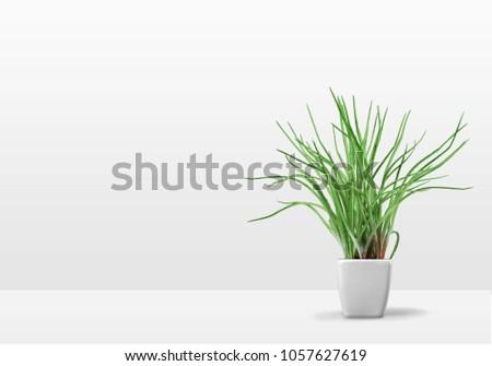 Plant on the shelf mock up #1057627619