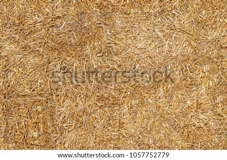 Seamless texture hay, straw #1057752779