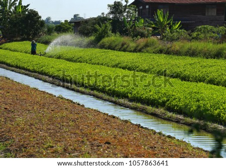 Gardeners are watering the vegetable garden, Using a watering machine. #1057863641