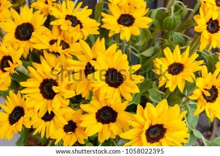 bouquet of beautiful yellow sunflowers in daylight #1058022395