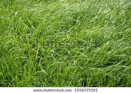 Grass Close Up #1058199281