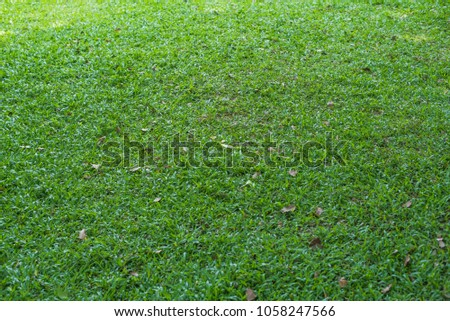 Leaves dry on green grass. #1058247566