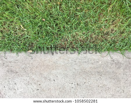 Grass with cement floor texture for background design #1058502281