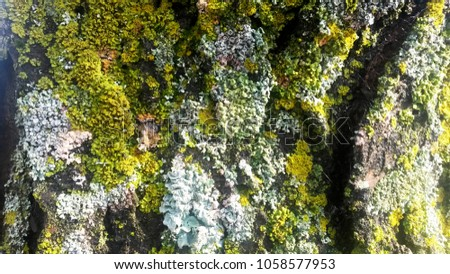 Moss and lichen covered tree #1058577953