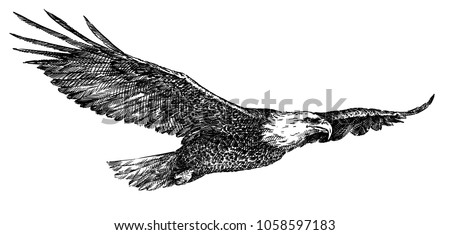 black and white engrave isolated eagle illustration