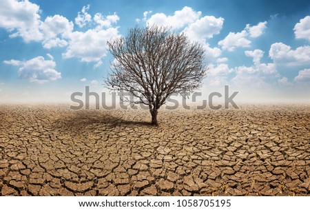 Dry cracked land with dead tree and sky in background a concept of global warming #1058705195