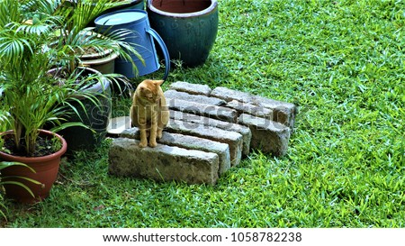 A domestic cat in the garden in search of prey #1058782238
