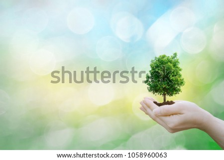 Ecology concept human hands holding big plant tree with on blurred sunset background world environment  #1058960063