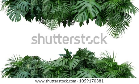 Tropical leaves foliage plant bush floral arrangement nature backdrop isolated on white background, clipping path included. #1059170381