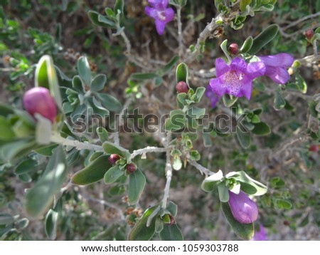 Closeup of Beautiful, Colorful Flowers in Early Spring #1059303788