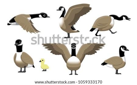 Canada Goose Flying Cartoon Vector Illustration