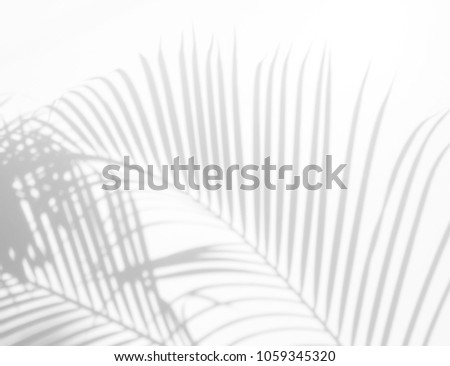 abstract background of shadows palm leaves on a white wall. White and Black #1059345320