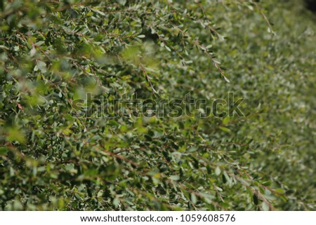 Foliage leaves background #1059608576