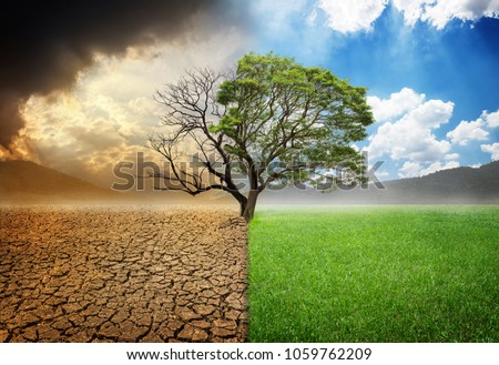 Environmental and global warming concepts, Live and dead big tree #1059762209