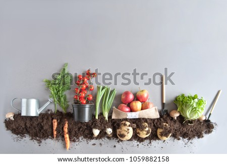 Organic fruits and vegetables growing in compost #1059882158