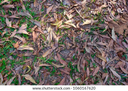 Many dry leaves fall on the grass #1060167620