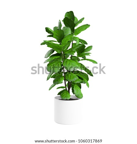 Artificial Fiddle Leaf Fig Tree planted white ceramic pot isolated on white background. 3D Rendering, Illustration. #1060317869