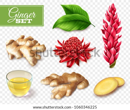Set of ginger root and red flowers, tea in glass cup, isolated on transparent background vector illustration Royalty-Free Stock Photo #1060346225