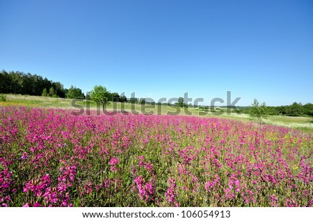 classic rural landscape. Flower field against blue sky #106054913