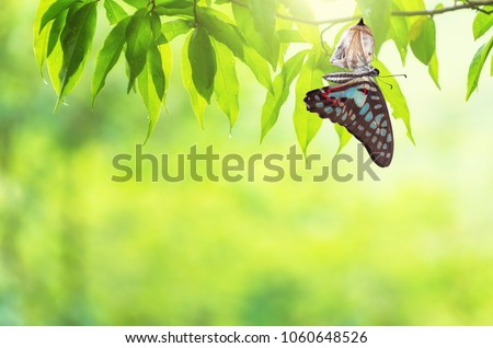 Amazing moment about butterfly change form chrysalis. #1060648526